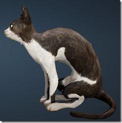 Tabby Cat Side