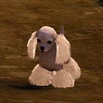 [Tier 3] Batian Dog