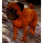 [Tier 3] Calpheon Chubby Dog