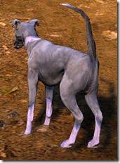 Tier 3 Kaia Racing Dog Back