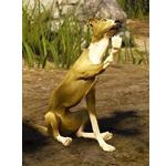[Tier 3] Kaia Racing Dog