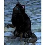[Tier 3] Mask Cat