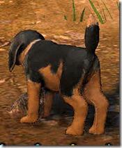 Tier 3 Naughty Dog Back