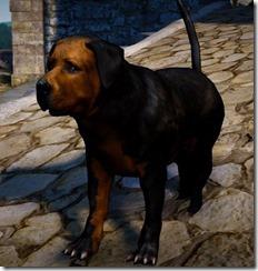 bdo-tier-3-dog-12