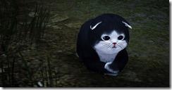 skunkcat2