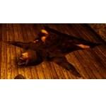 High-Quality Bear Hide Carpet