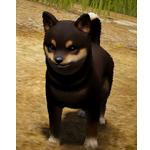 [Tier 4] Shaggy Dog