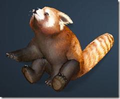 bdo-red-panda-pet