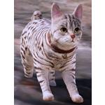[Tier 3] Junaid Cat