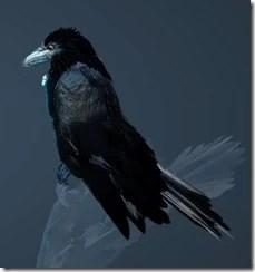 Crow Appearance 2
