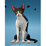 Piebald Cat