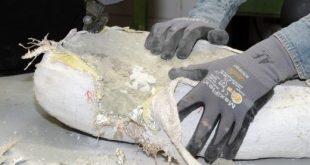 Új dinoszaurusz a bécsi Természettudományi Múzeumban
