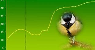 Sárgulnak a széncinegék, de nem az irigységtől – A felmelegedés hatásai a madarak tollazatára