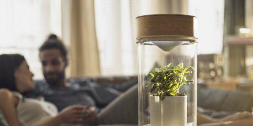 Egy növény, ami akkor virul, ha a párkapcsolat is!