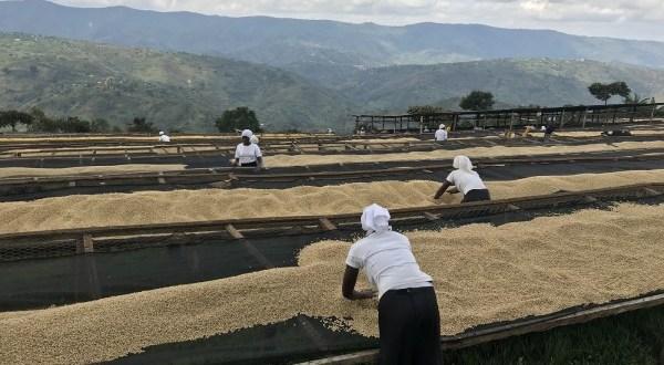 A kávé világnapján a közösséget is ünnepeljük