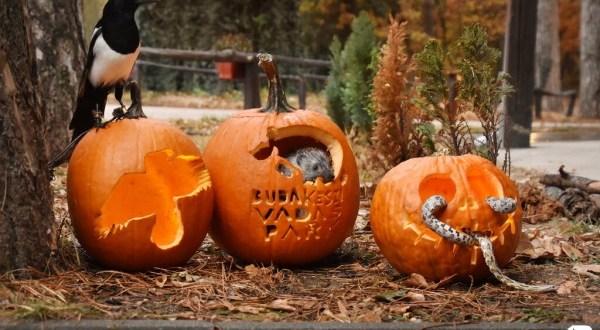 Halloween éjszakája a Budakeszi Vadasparkban