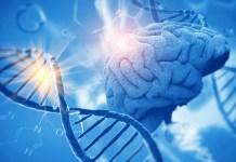brain genome