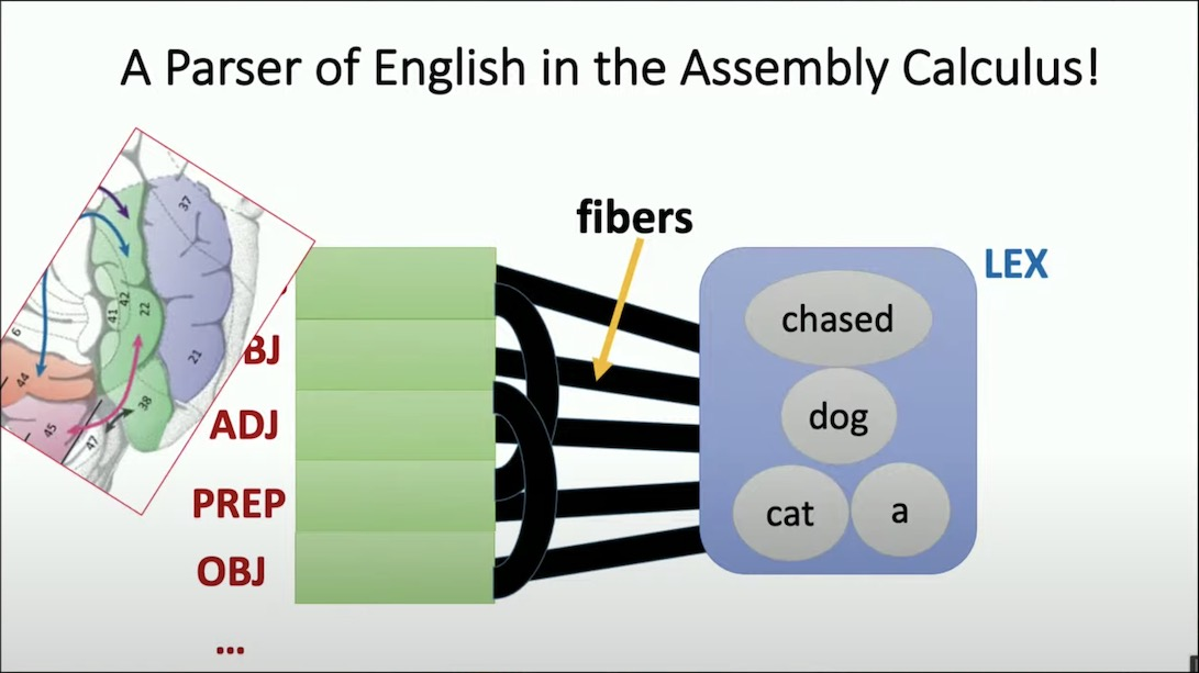 assembly calculus natural language processing