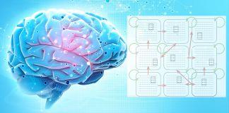 brain neuron assemblies