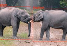 elephants object detection