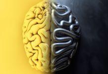 AI algorithms vs biological brain
