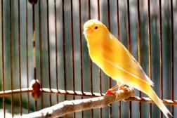 pet bird good for kids