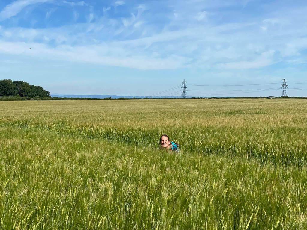 Rachel hidden amongst the green wheat