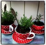 red dot tea cups