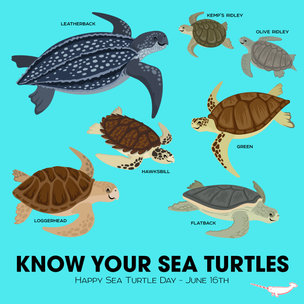 What Eats A Sea Turtle
