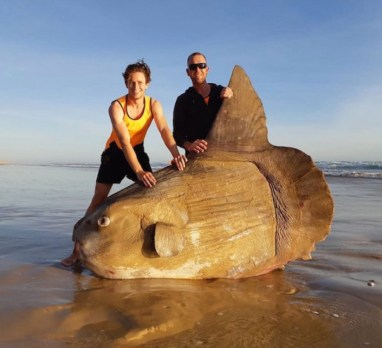 friendly australians with giant fish