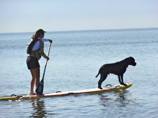 paddle board instructor with dog