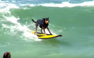 best dog surfing videos ever
