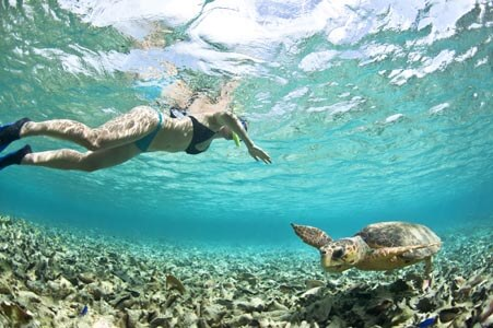 turtle-scuba