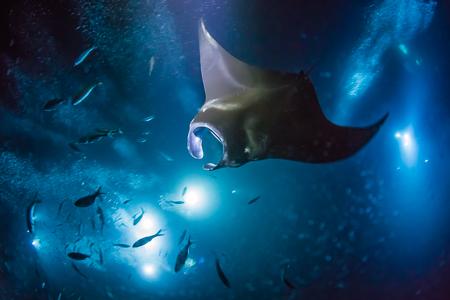 manta_ray_snorkel-129