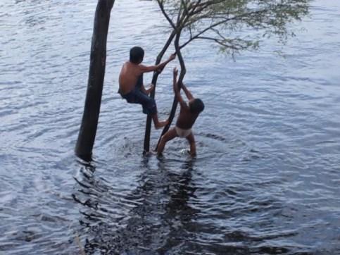 boys swimming at Chino from tree