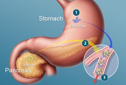 pancreas releasing insulin