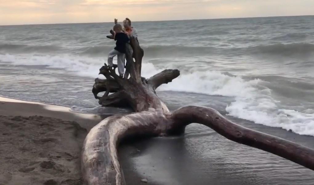 Erie Rest Beach drift wood