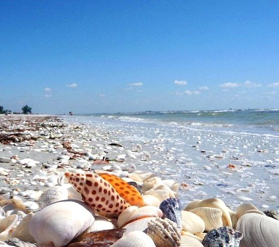 Sanibel island fl the world 39 s best shelling beaches for Top 1 beach in the world