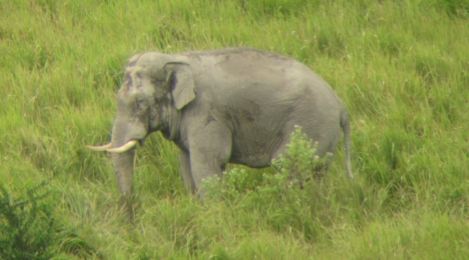 Ethical Elephant Experience in Thailand