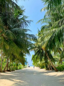 Thoddoo beach views with palms