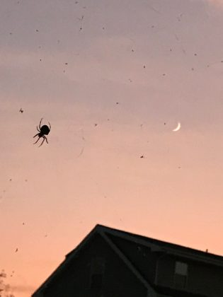 Along Came a Spider…..
