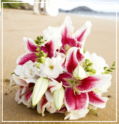 Aloha Maui Beach Wedding Planners & Specialists ~ Al-A-Carte