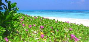 Koh Tachai (เกาะตาชัย), also called Virgin Island, in Mu Koh Similan National Park, Thailand. Perhaps Thailand's most beautiful island.