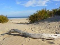 Beach Music Beachfront Guesthouse Selfcatering Jeffreys Bay South Africa Drift Wood