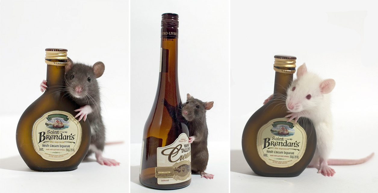 Ratswithbottles