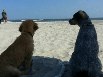 island-breeze-hotel-pet-friendly-wildwood-nj