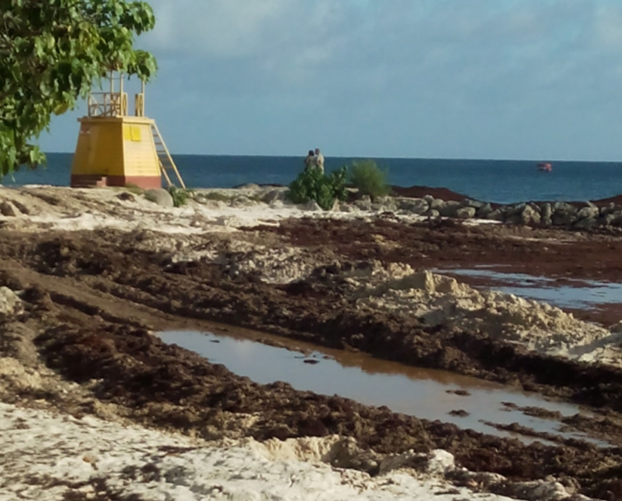Sargassum Seaweed and Miami Beach - beach to prairie