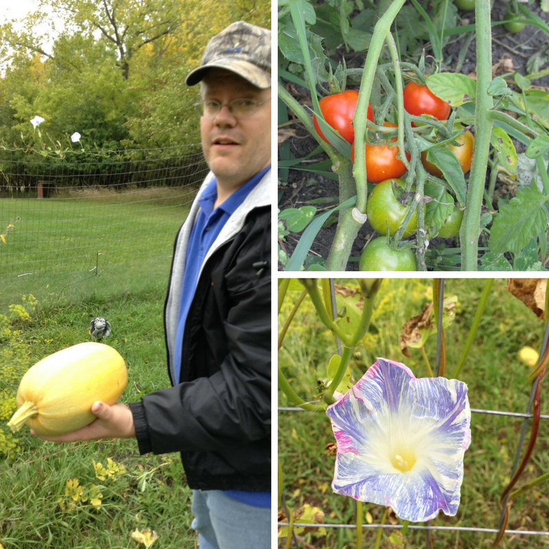 Josh in the Garden, Tomatoes and Morning Glories