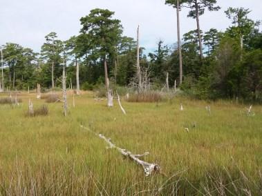 Va Beach First Landing State Park (6)