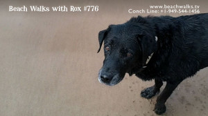 Beach Walk 776 - Meditation on Fetching with Lexi Dogg